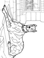 coloring-pages-animals-dogs-30