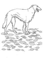coloring-pages-animals-dogs-6