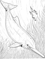 coloring-pages-animals-dolphin-10