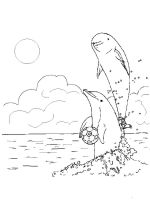 coloring-pages-animals-dolphin-3