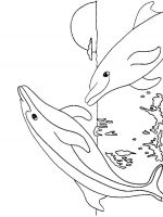 coloring-pages-animals-dolphin-5