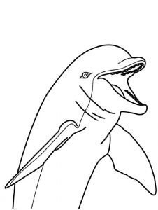 coloring-pages-animals-dolphin-7