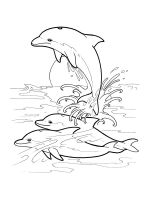 dolphin-coloring-pages-18
