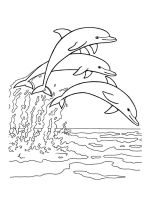 dolphin-coloring-pages-31