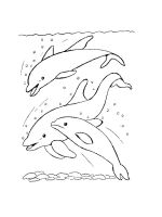 dolphin-coloring-pages-35