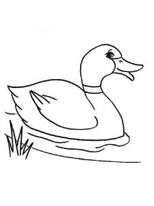 coloring-pages-animals-duck-13