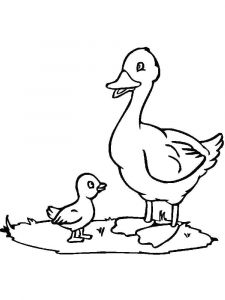 coloring-pages-animals-duck-15