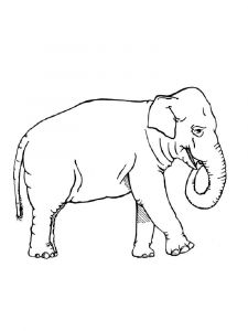 coloring-pages-animals-elephant-10