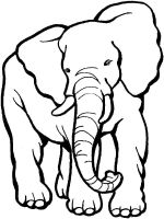 coloring-pages-animals-elephant-16