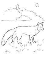 coloring-pages-animals-fox-1