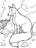 coloring-pages-animals-fox-12