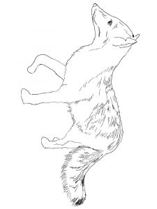 coloring-pages-animals-fox-14