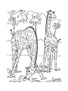 coloring-pages-animals-giraffe-14