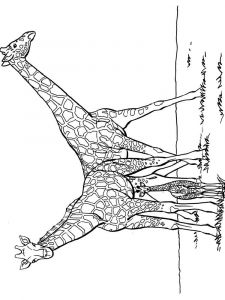 coloring-pages-animals-giraffe-2