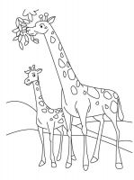 coloring-pages-animals-giraffe-7