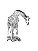 giraffe-coloring-pages-27