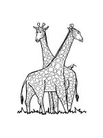giraffe-coloring-pages-33