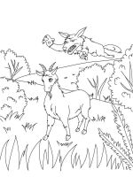 coloring-pages-animals-goat-6