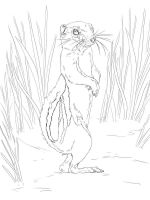 gopher-coloring-pages-1