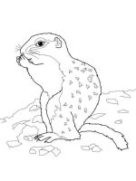 gopher-coloring-pages-2