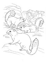 gopher-coloring-pages-9