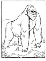 gorilla-coloring-pages-12