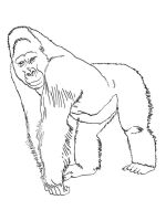 gorilla-coloring-pages-9