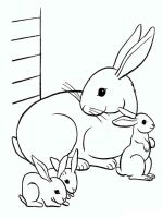 hares-coloring-pages-13