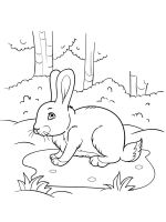 hares-coloring-pages-38