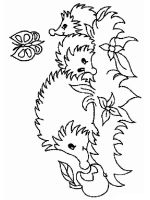 Hedgehog coloring pages. Download and print hedgehog