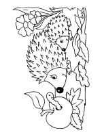 coloring-pages-animals-hedgehog-12