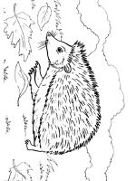coloring-pages-animals-hedgehog-18