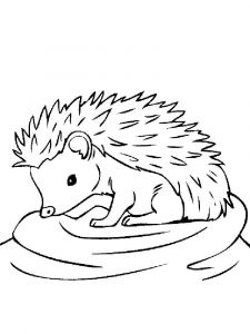 coloring-pages-animals-hedgehog-2