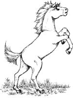 coloring-pages-animals-horse-13