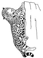 jaguar-coloring-pages-3