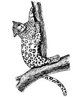 jaguar-coloring-pages-4