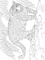 jaguar-coloring-pages-6
