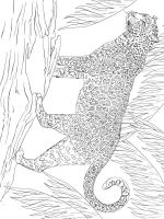 jaguar-coloring-pages-8