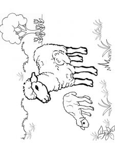 coloring-pages-animals-lamb-3