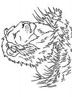 coloring-pages-animals-lion-19