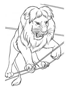 coloring-pages-animals-lion-20