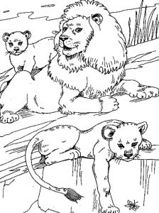 coloring-pages-animals-lion-6