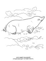 mole-coloring-pages-4
