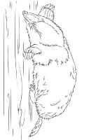 mole-coloring-pages-7