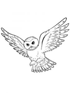 coloring-pages-animals-owl-15