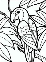 coloring-pages-animals-parrot-2