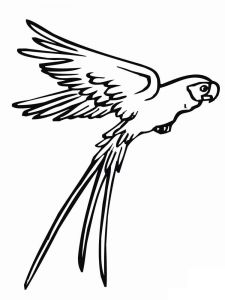 coloring-pages-animals-parrot-5