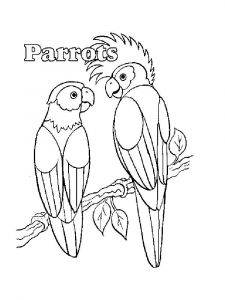 coloring-pages-animals-parrot-8