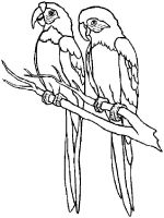 parrot-coloring-pages-1