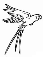 parrot-coloring-pages-11